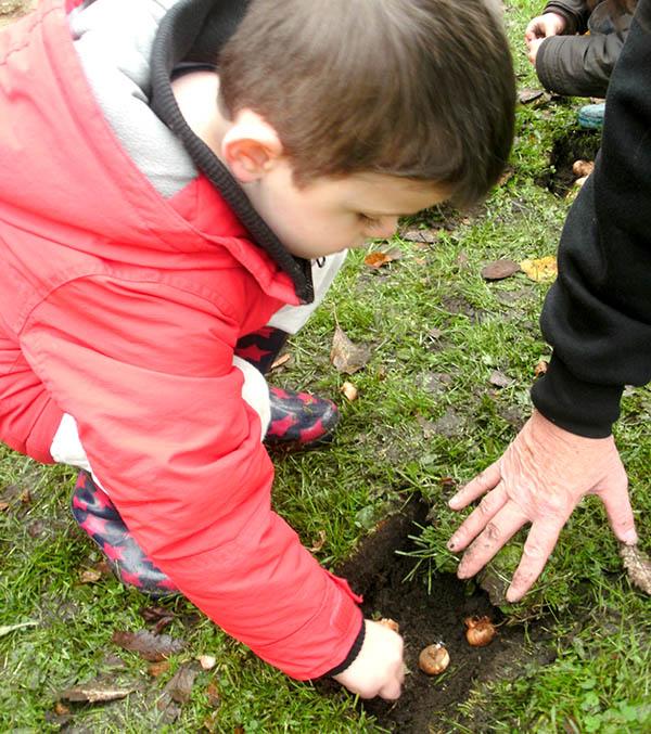 Nursery Children Plant 500 Bulbs
