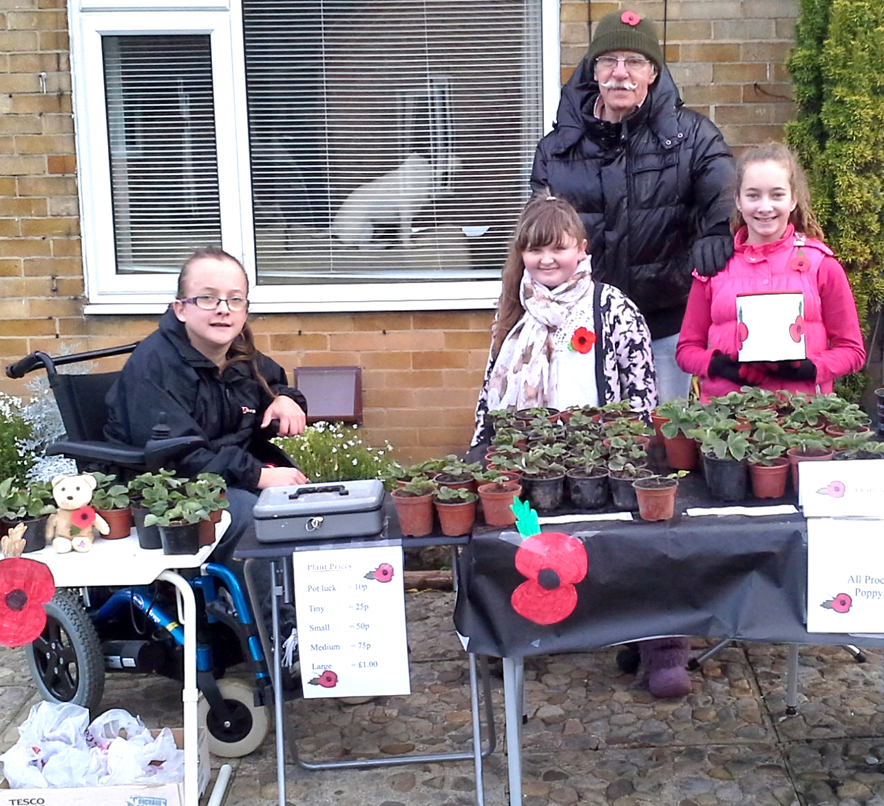 Strawberry Plant Sale for Poppy Appeal