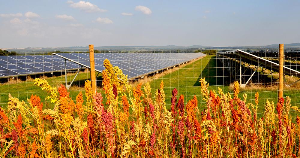 Solar Farm Proposed on Land Near School Aycliffe