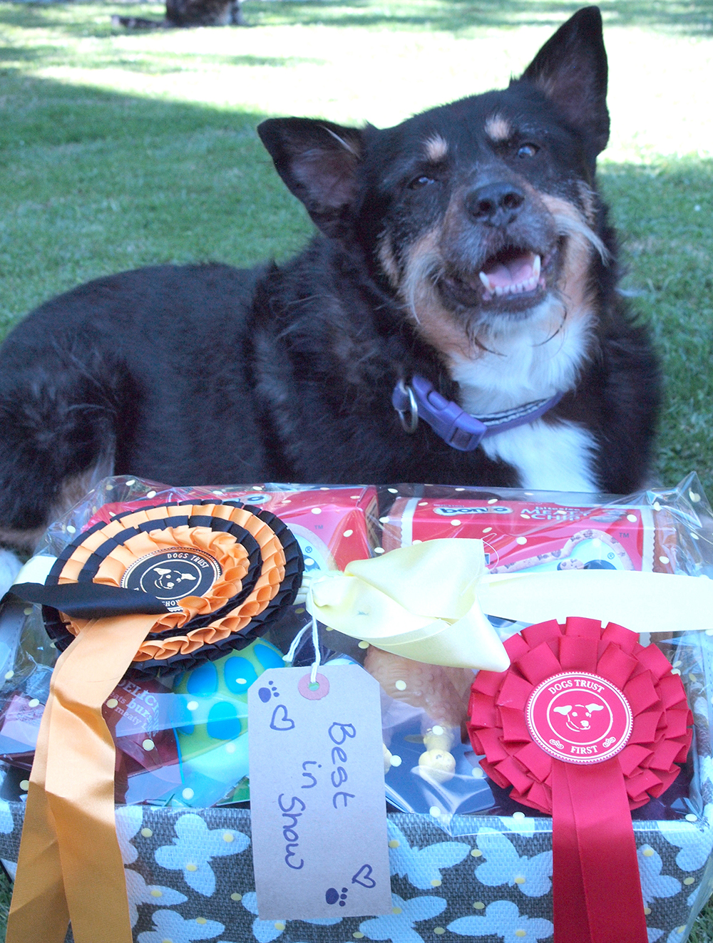 """Aycliffe Dog Wins """"Best in Show"""""""