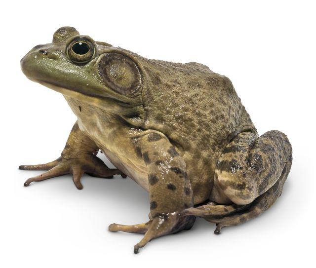 Secret World of Reptiles & Amphibians