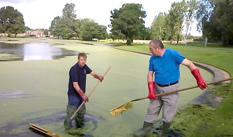 Town Council & Community Tackle Lake Duckweed