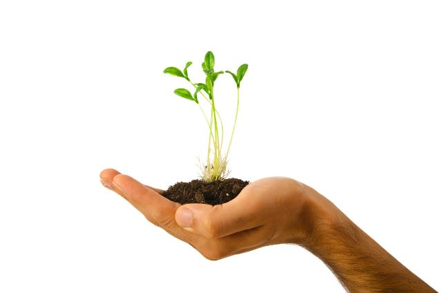 £150 Grants for National Tree Week