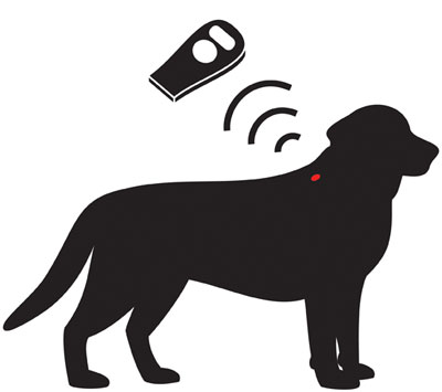 New Law – All Dogs Must be Microchipped