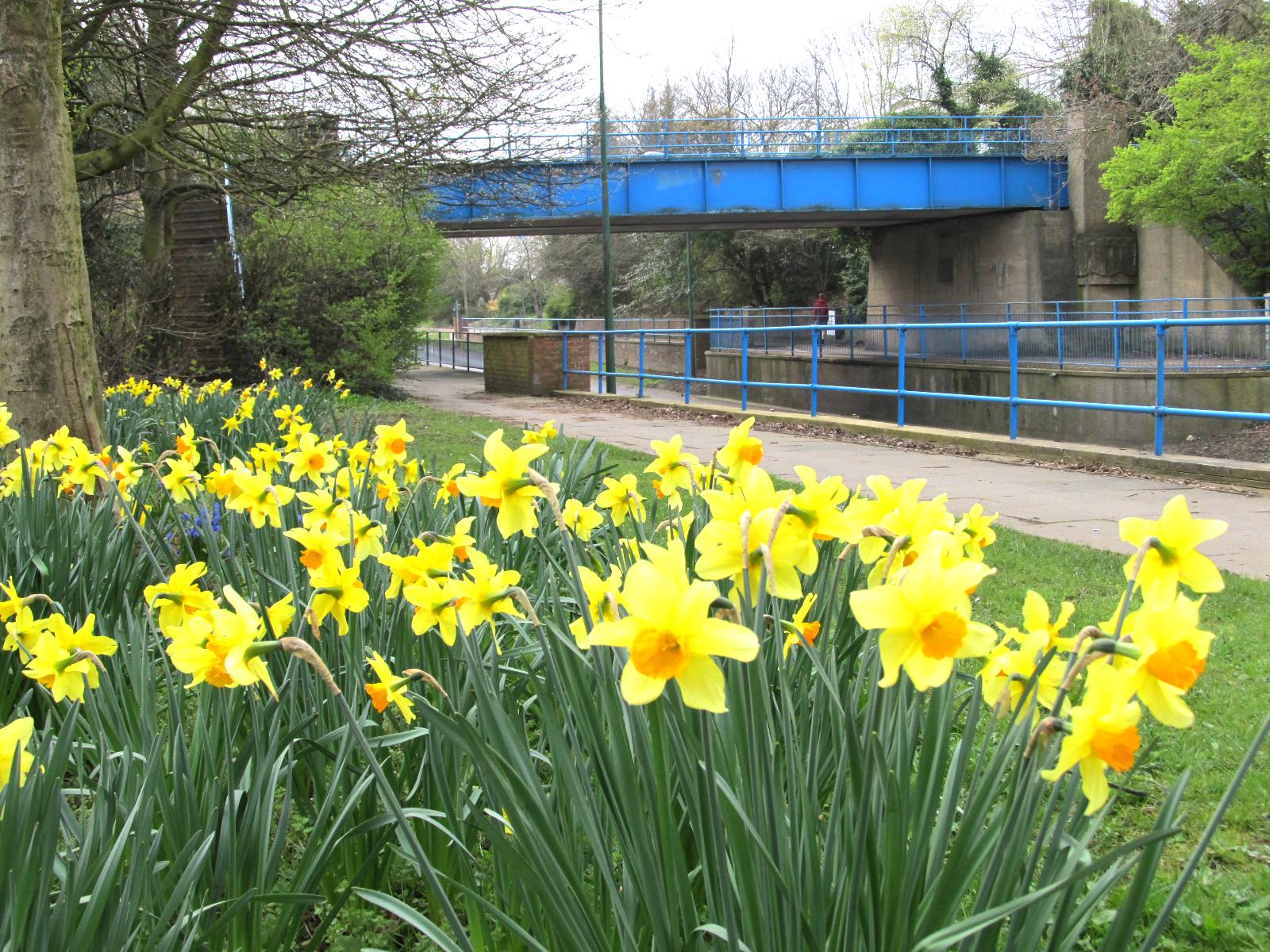 Daffodil Coffee Morning