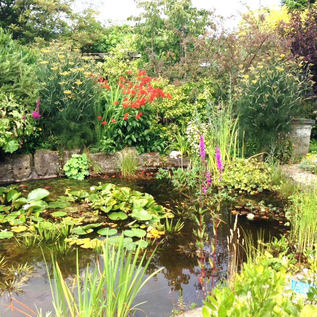 Local Garden Open to the Public