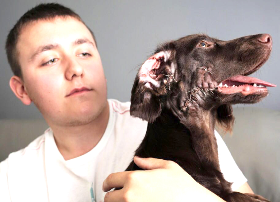 Bull Terriers Attack Puppy in Woodham