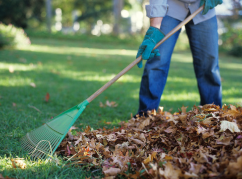 Garden Waste Bin Collections End for Winter months