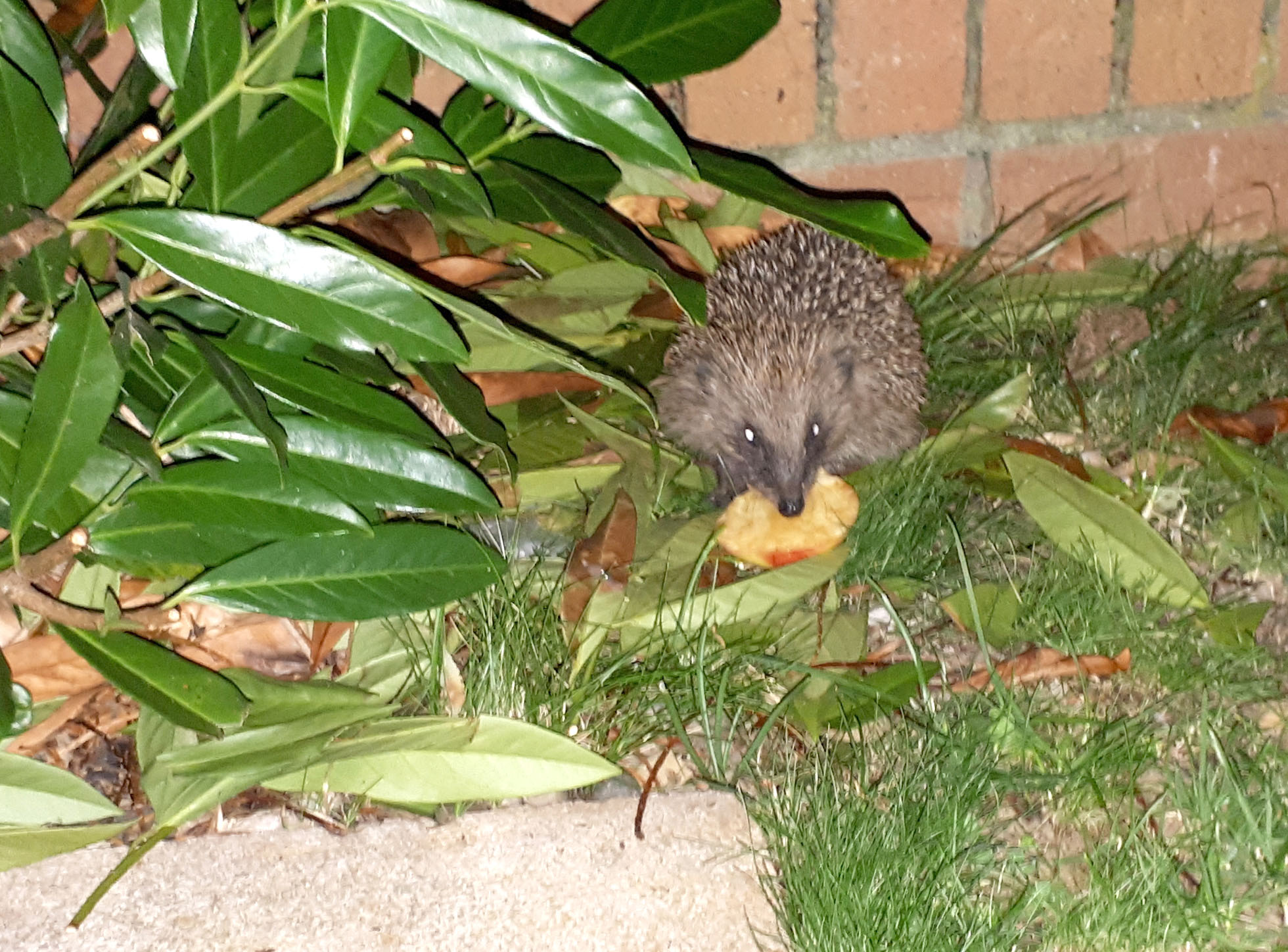 Look After Hedgehogs