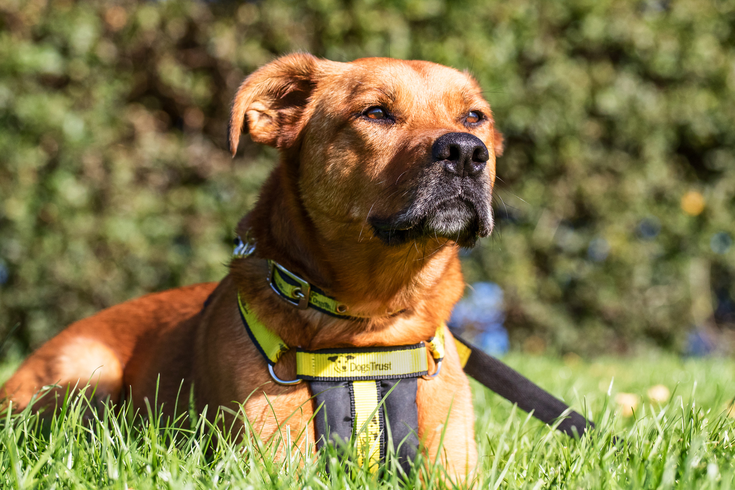 2017 The Most Popular Year for Rehoming a Dog