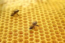 Bee Keeping in Aycliffe
