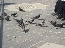 Free to Feed the Birds