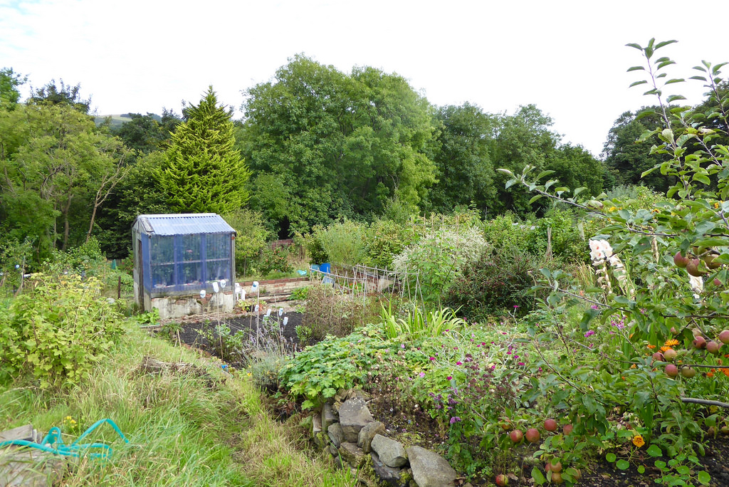 Still Time to Shape Allotment Policy in County