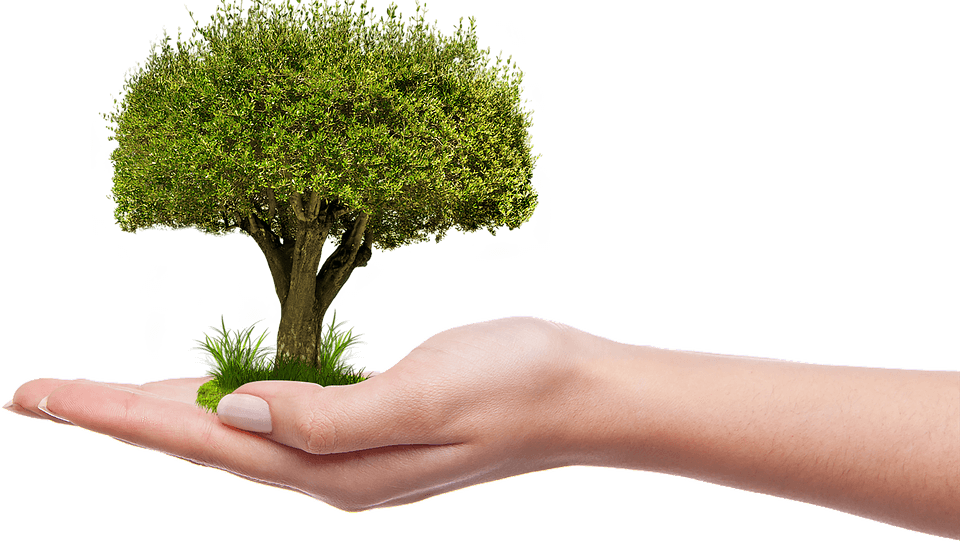 Funding Available for National Tree Week