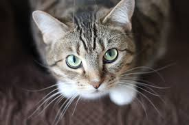 Search On For The UK's Most Marvellous Moggy