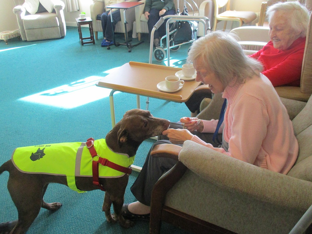 'Creature Comforts' visit Care Home