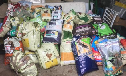 Junction7 Helping Families to Keep Their Pets