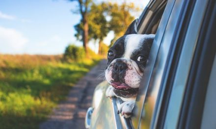 Guidance for travelling with your pets in the hot weather