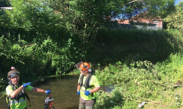 Site of Historic Bridge Targeted for Clean-Up