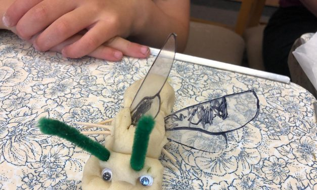 Summer Workshops Aim to Connect Crook Families with Wildlife