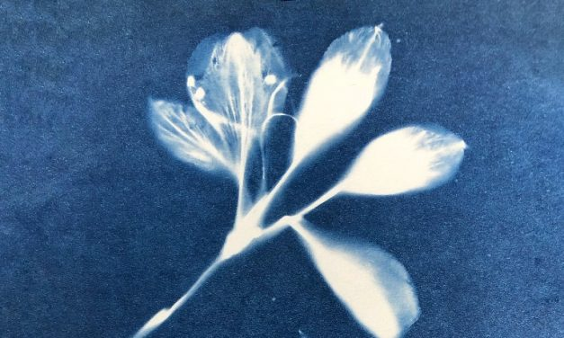 Cyanotype Workshop at Greenfield Arts