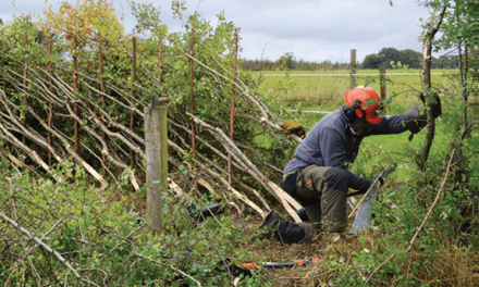 Those skilled in the art of hedgelaying are called to annual competition