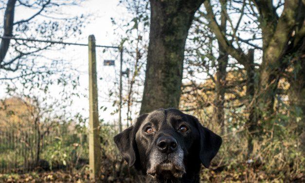 Police Dog 'Jet' Retires