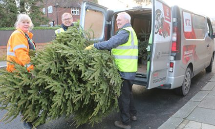 Tree Collection Raises Over £12,000