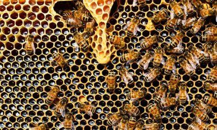 Beginners Beekeeping Course