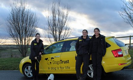 Dogs Trust is Top Dog for Foster Homes