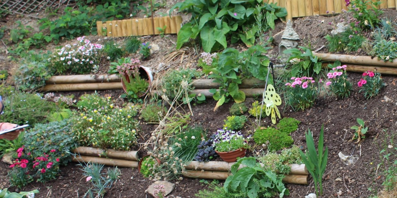 Still a Chance to Grab a Gardening Prize