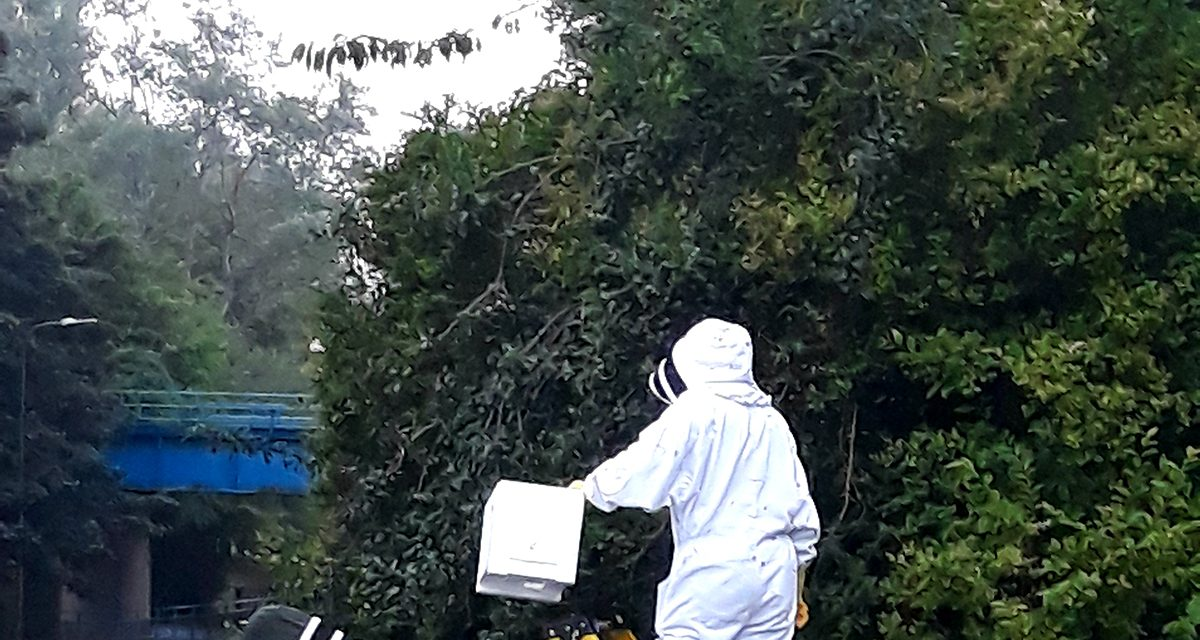 40,000 Bees Removed From Trees near Blue Bridge