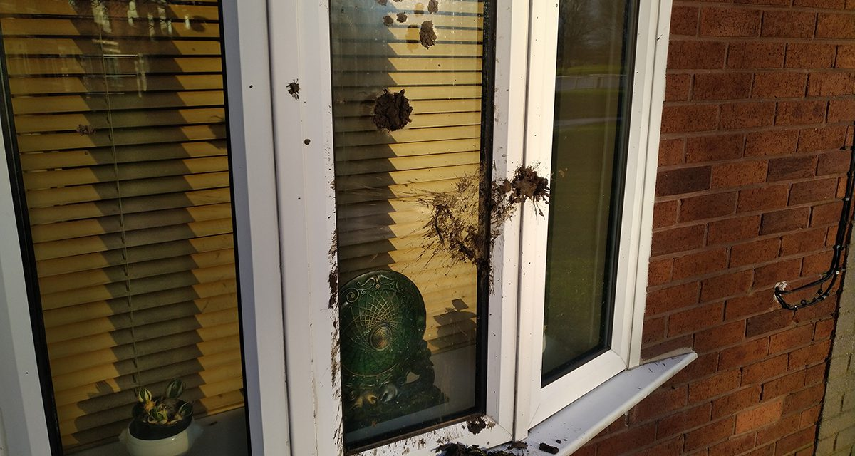 Mindless Vandalism Continues in West Ward