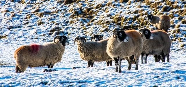 POLICE NOTICE – Lambing season